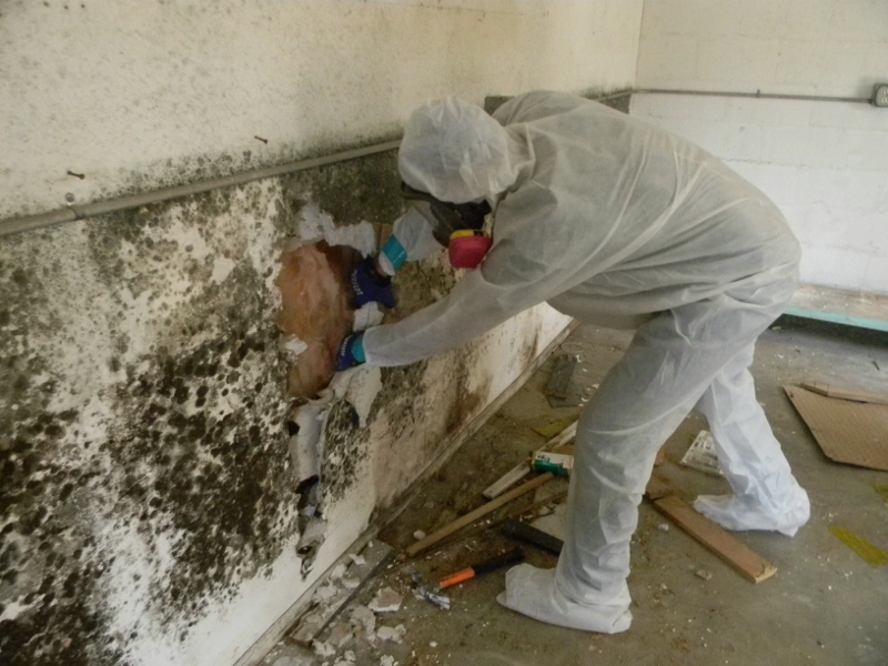 Mold Removal Amp Remediation Inspection Testing Rochester